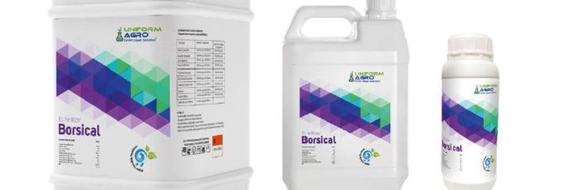 Borsical