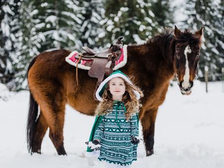 Winter Wonderland Horse Portraits