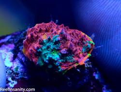 ReefInsanity.com