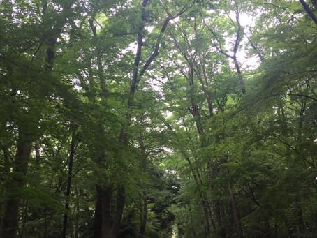 Refreshing walk / 清々しい小径