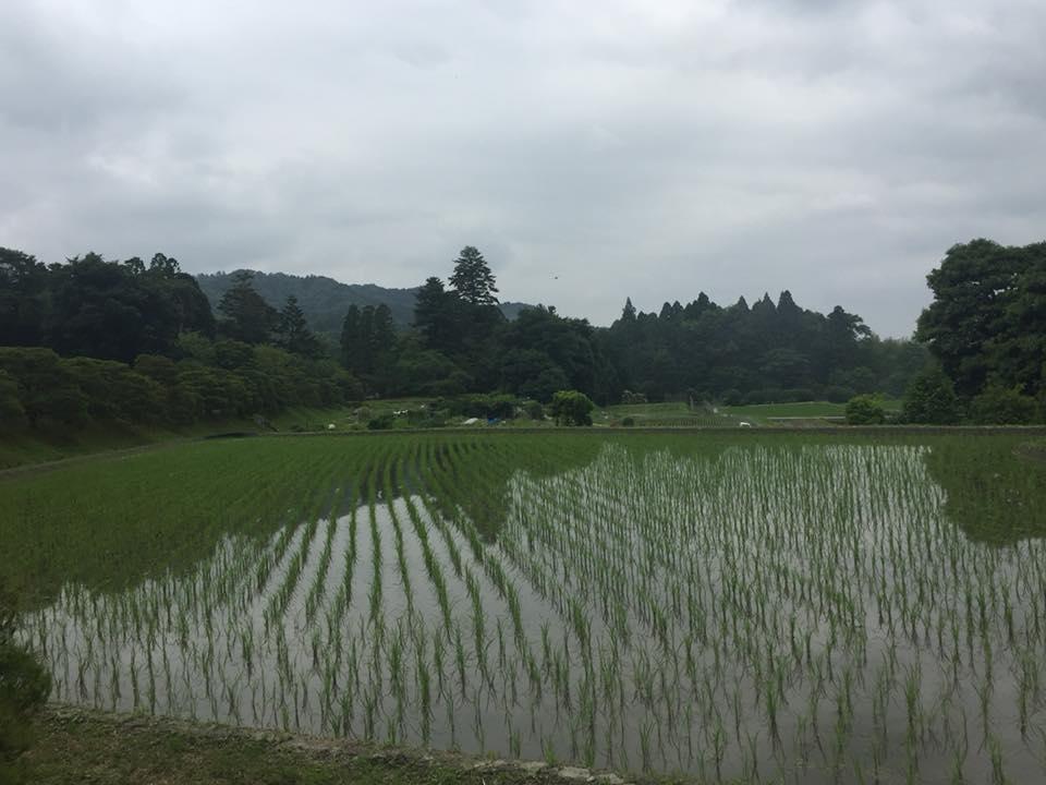 shugakuin-6