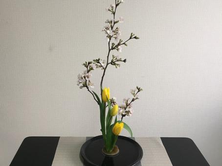 Spring in full bloom / 春爛漫