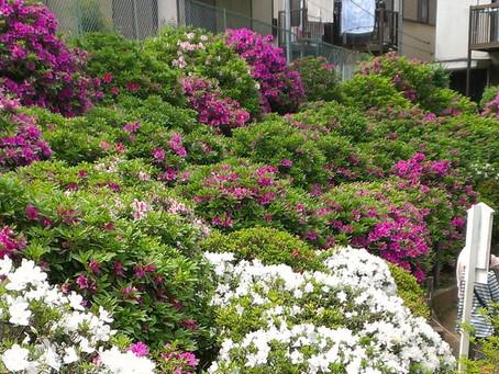 Flowers of Edo / 江戸の花