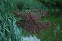 Plante-estacade-yourte-maikana.JPG