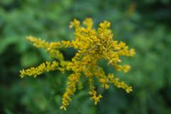 Fleur-yourte-estacade-maikana.JPG