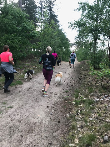Dog Fit Club - DogJog.JPG