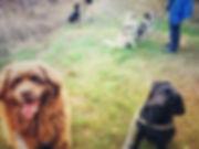 Dog Fit Club - Dog Power Walking.JPG