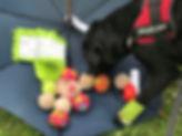 Dog Fit Club - FUN.JPG