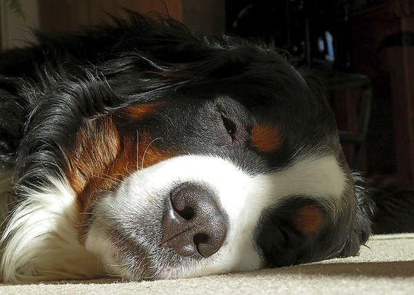 Massage - Dog Body Relax Massage.jpg