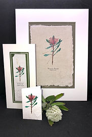 Trio - Botanica (TAS Waratah).JPG