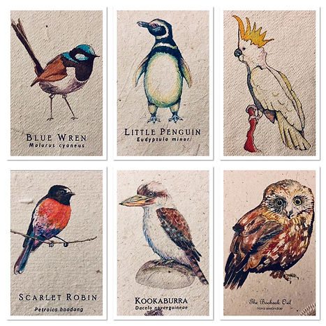 Avian selection 6.jpg