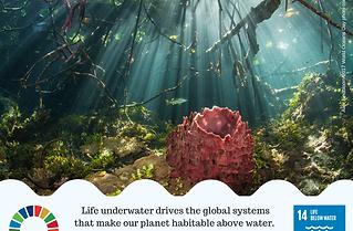WOD2018_life_underwater.png
