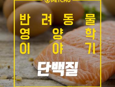 알파벳과 펫츄가 함께하는 반려동물 영양학 시리즈 - 영양학 이야기 3. 단백질