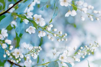 Floral spring background, soft focus. Br