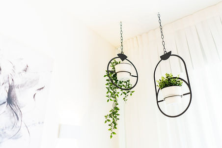 צמחי נוי- צילום הום סטיילינג