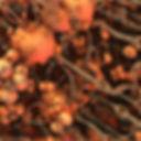 Tiffany McFarlane--Copy of cloudberries_