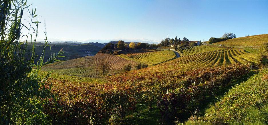Monferrato hills.jpg