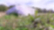 Screen Shot 2020-01-03 at 1.07.25 PM.png