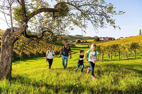 Weinregion-Bad-Radkersburg_c_pixelmaker.