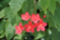 夏の赤い花の写真
