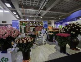 Negrete-Star-Roses-1-300x200.jpg