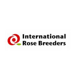 International Rose Breeders
