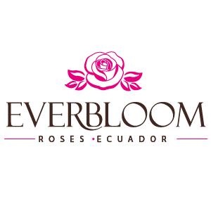 EVERBLOOM ROSES ECUADOR