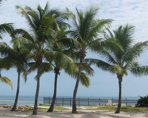 modulle palm.jpg