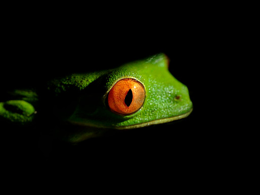Wildlife Hotspots in Costa Rica