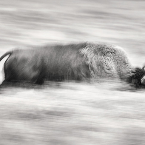 Guide to Motion Blur and Panning in Photography
