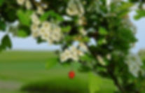 flowers-4215592_1920.jpg