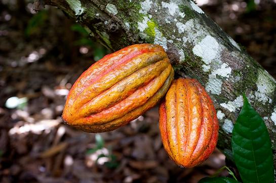 fairtrade choco 2 w.png