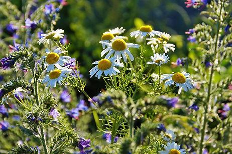 wild herbs.jpg