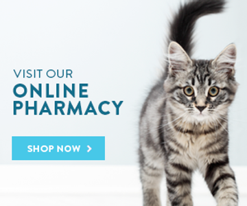 vets first choice vet acton ma online ph