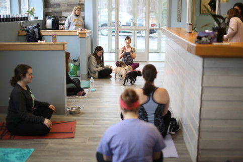 Veterinarian Acton MA Powder Mill Animal Hospital Yoga With Dogs