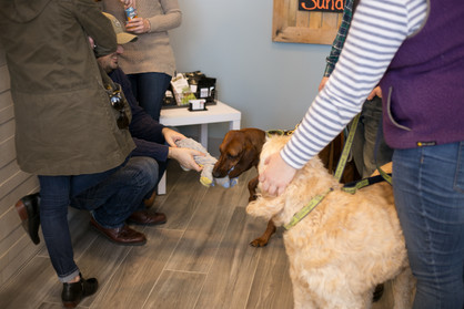 Veterinarian Acton MA Grand Opening