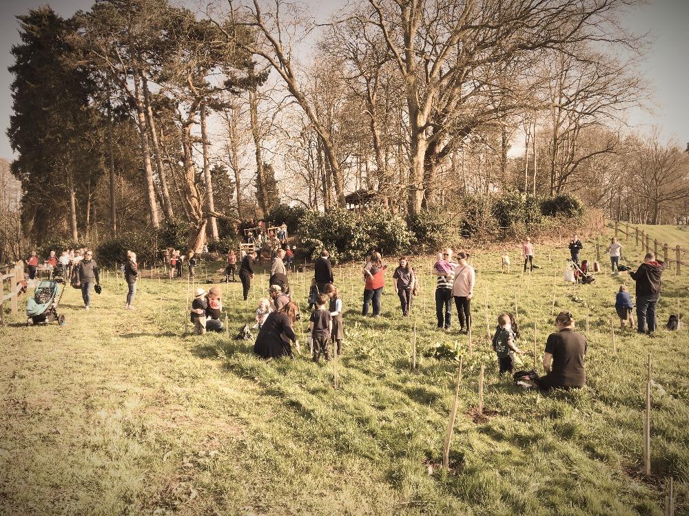 Tree Planting at Painshill