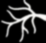 Treewhiteouline.png