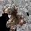 Thumbnail: Boquete Birdeater