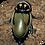 Thumbnail: Glowspot Roaches