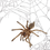 Thumbnail: Socotra Island Blue Baboon