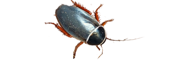 Extinct Roaches