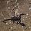 Thumbnail: Emperor Scorpion
