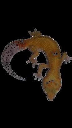 Franken Gecko.png