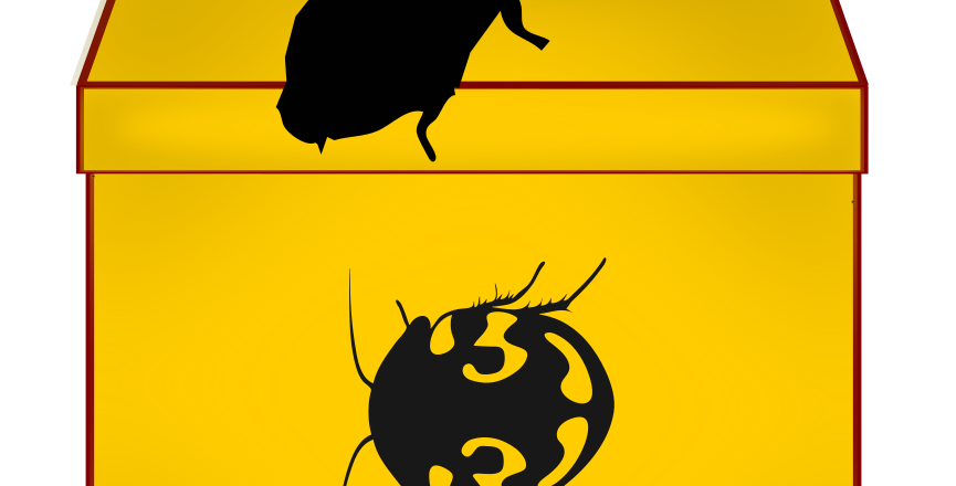 Roach Mystery Box