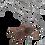 Thumbnail: Rear Horned Baboon
