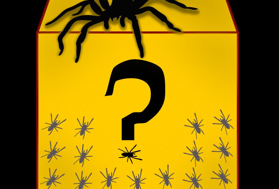 Tarantula Mystery Boxes