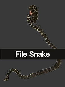 file_snake-removebg-preview-removebg-pre