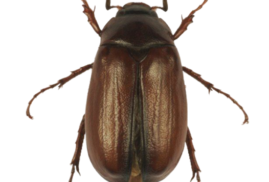 June Bug Care Sheet