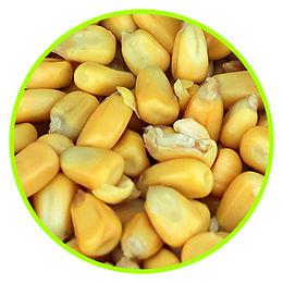 ferm_corn.jpg